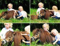 pony-1-800x618